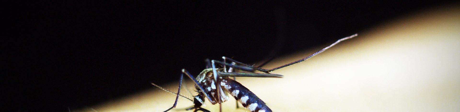 Info Dengue: Sistema de alerta E-vigilância